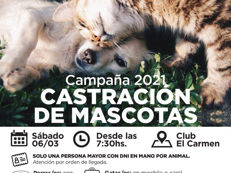 Castración de mascotas: Comenzarán la semana próxima en zona rural de Avellaneda