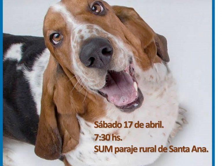Castración de mascotas en Avellaneda: Este sábado 17, se realizarán en Santa Ana