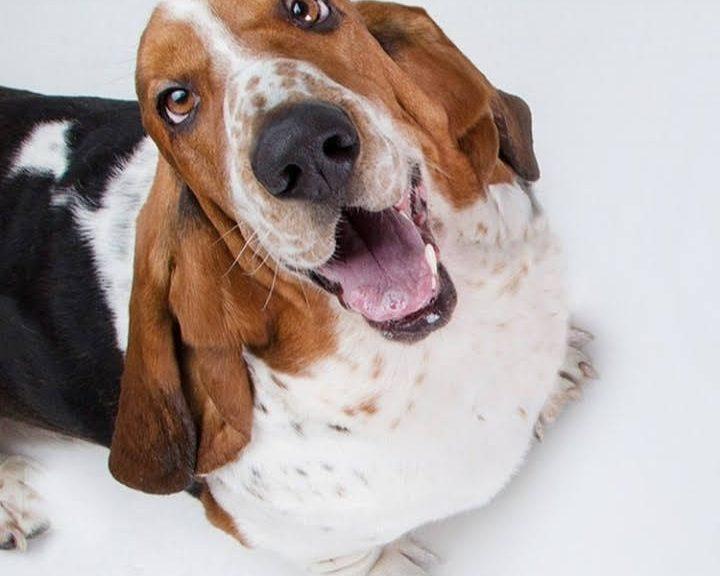 Castración de mascotas en Avellaneda: Este sábado se realizará en Avellaneda Oeste