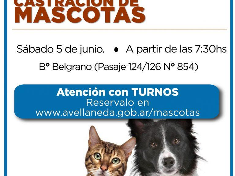 Castración de mascotas en Avellaneda: Sacá tu turno on line