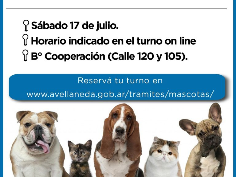 Castración de mascotas en Avellaneda: Obtené tu turno on line