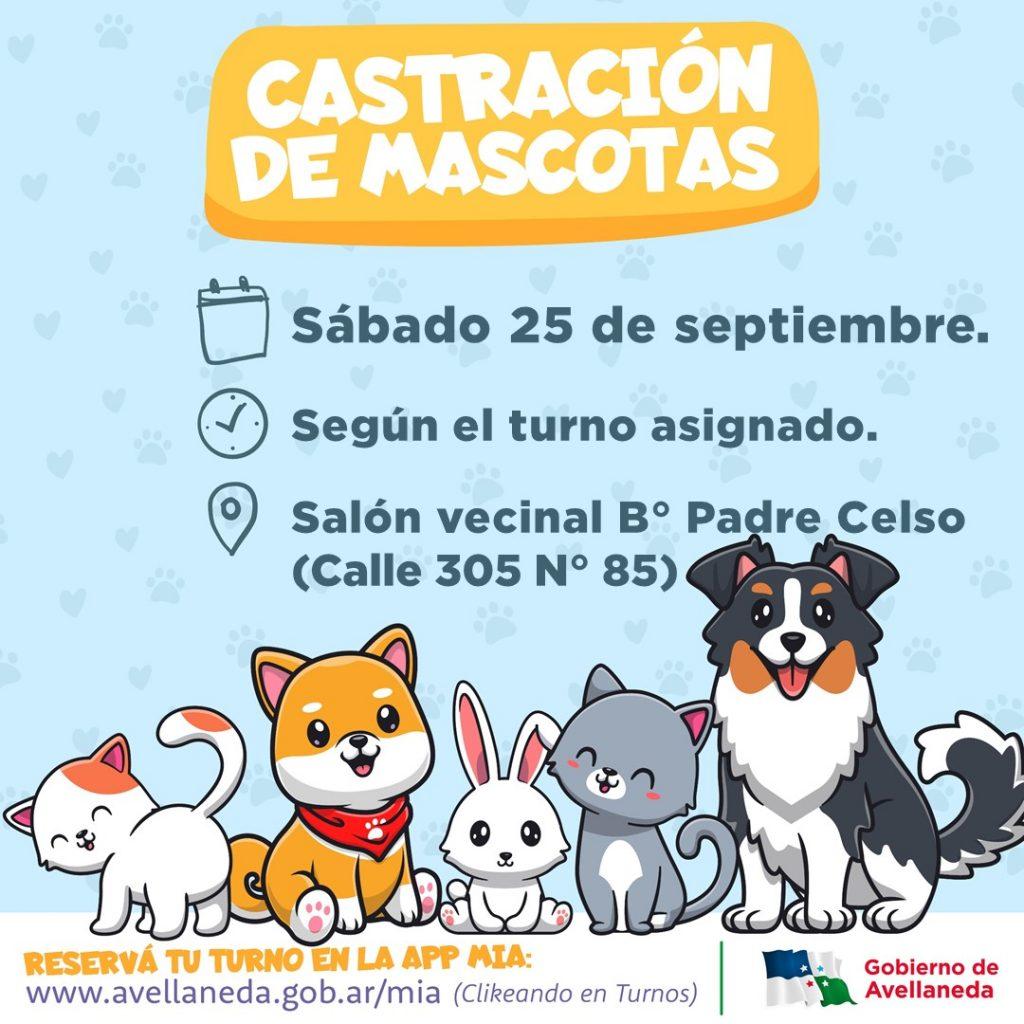 Castración de mascotas en Avellaneda: Este sábado, será en B° Padre Celso