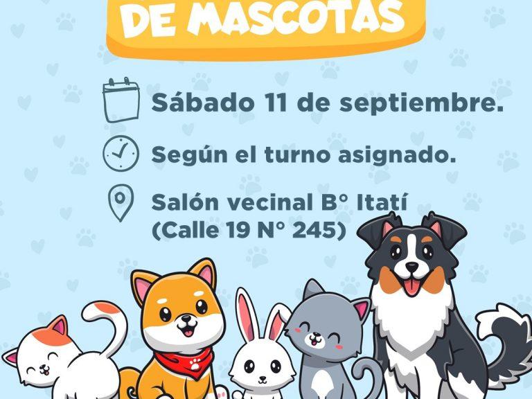 Castración de mascotas en B° Itatí de Avellaneda: Obtené tu turno desde la app Mi Avellaneda